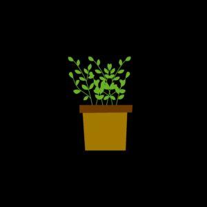 Kruidenplanten
