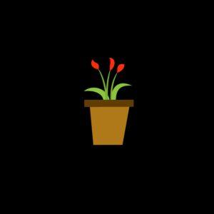 Bloemen (voorjaar / zomerbloeiers)